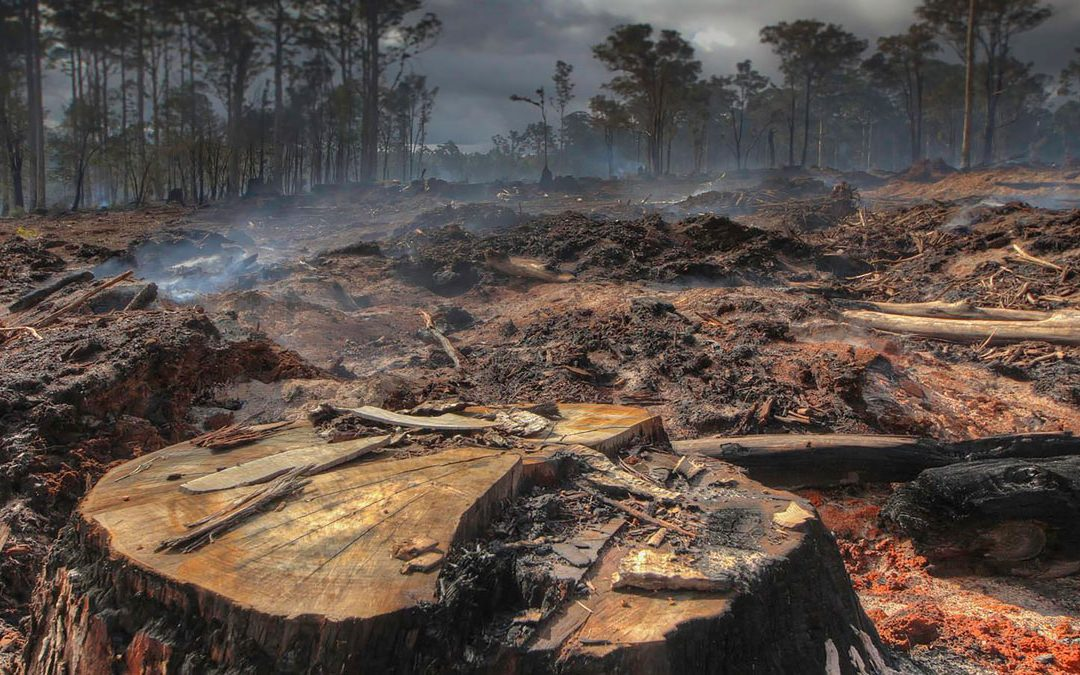 Skulduggery in the forests: Logging agency's plans to lock in excessive logging until 2033
