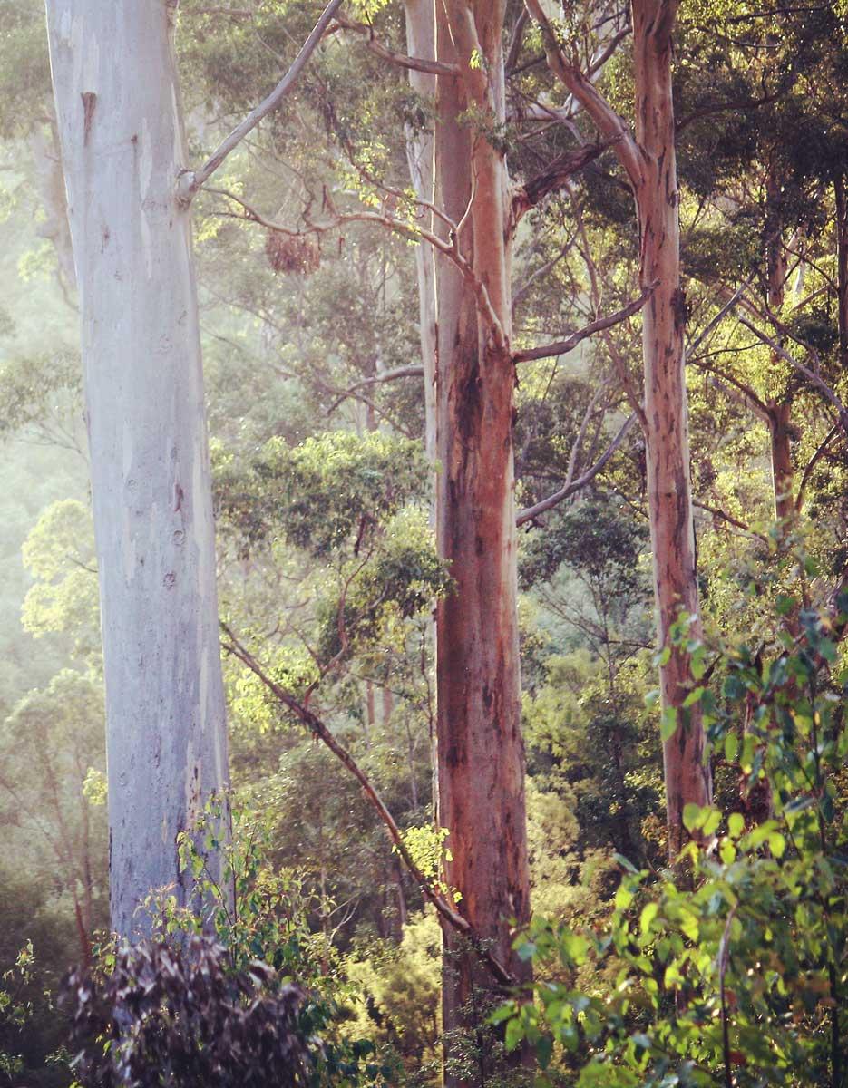 WA Forest Alliance