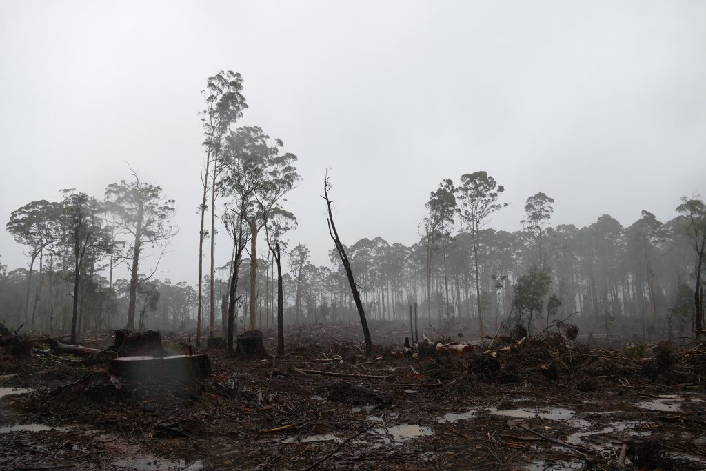 Charred Perup Forest - Image: Donna Chapman