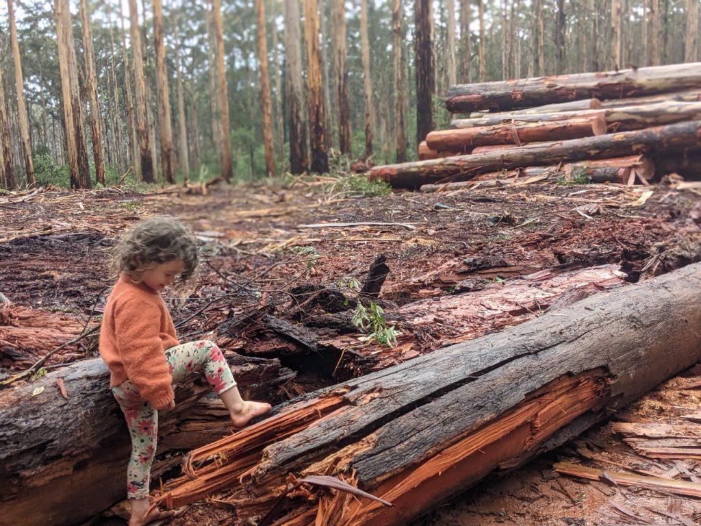 Treenbrook Forest Image: Jane Hammond